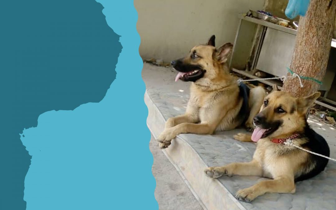 Billy and Bobby, The Water for Africa team guard dogs are growing so fast!