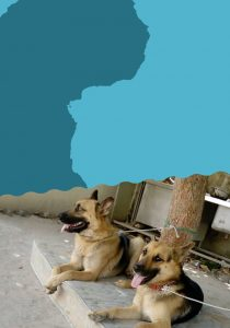 Billy and Bobby, The Water for Africa team guard dogs